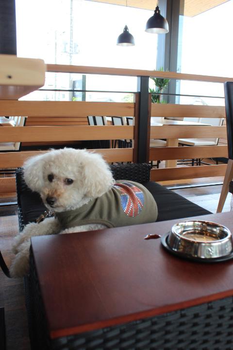 あいけんのえきのカフェでくつろぐA