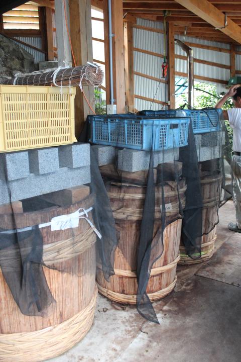 並んでいる大きな樽