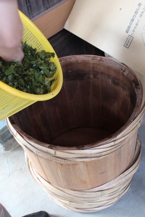 揉捻後茶葉を樽へ
