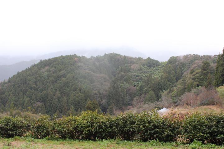 小笠原邸のやま茶とその背景