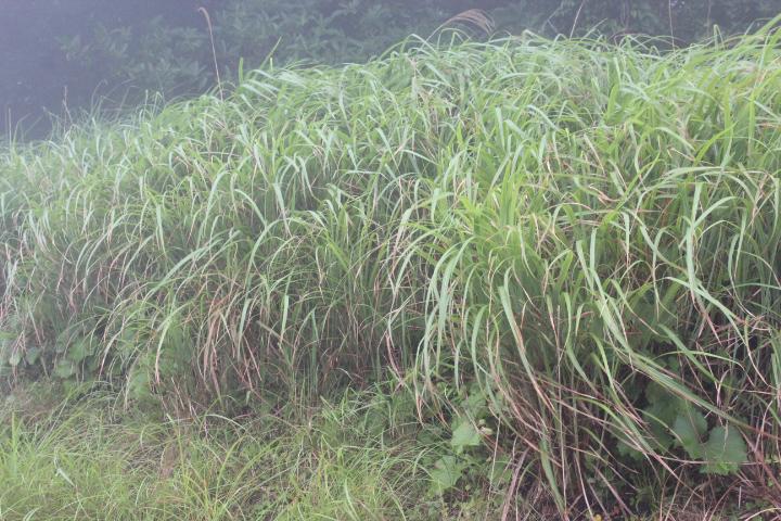 畑のそばに生える周囲の草