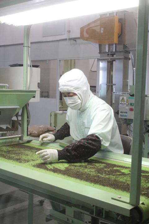 目視によるチェック 製茶工場