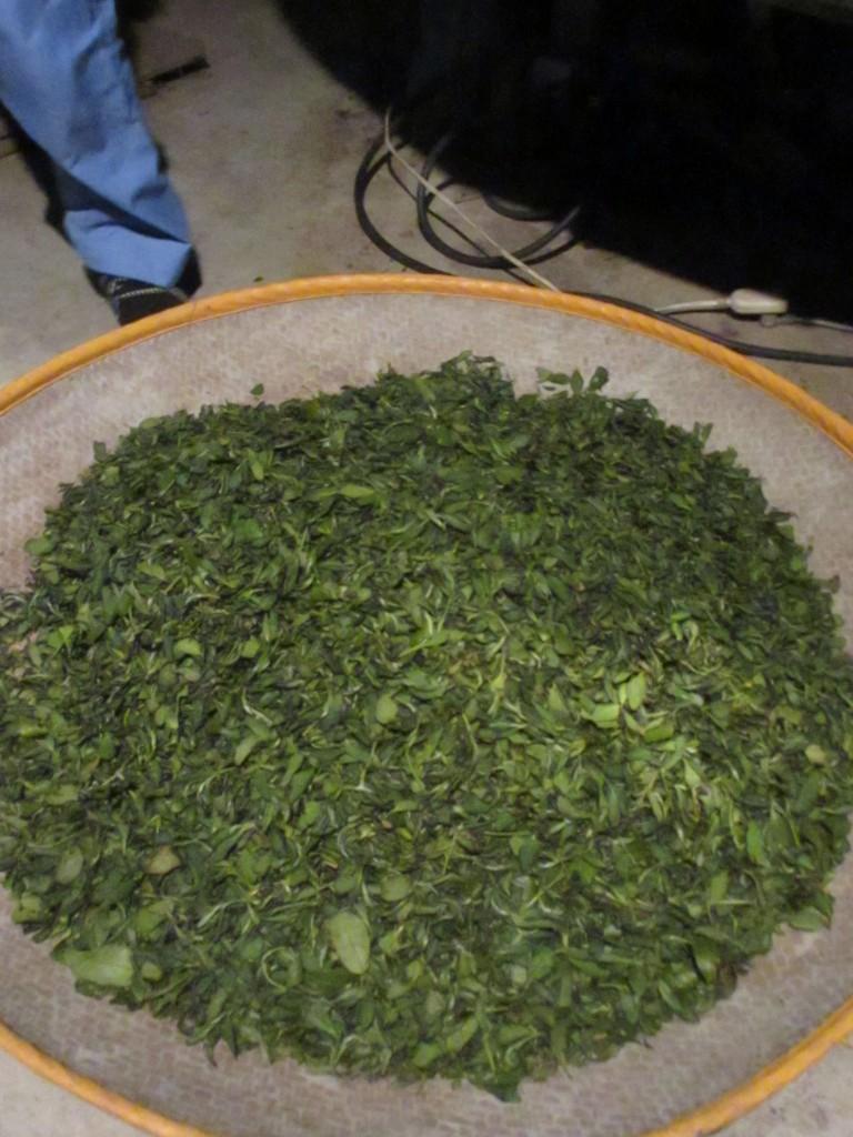 釜炒り後の茶葉