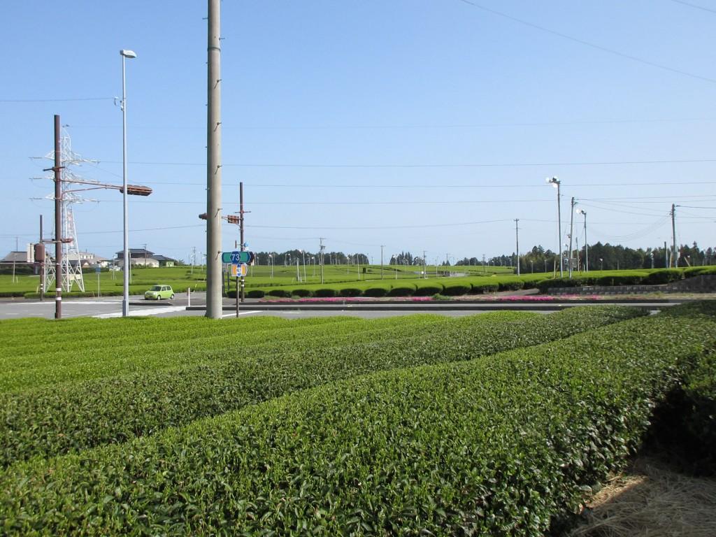 カネロク松本園の茶畑