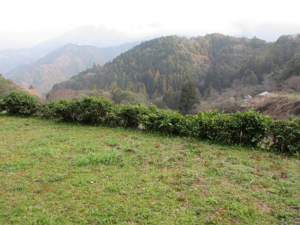 碁石茶天日干し用の前庭