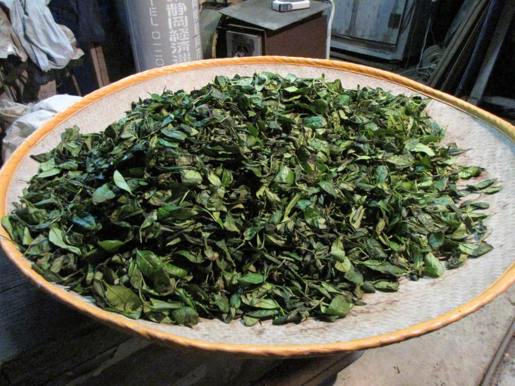 室内萎凋後の茶葉