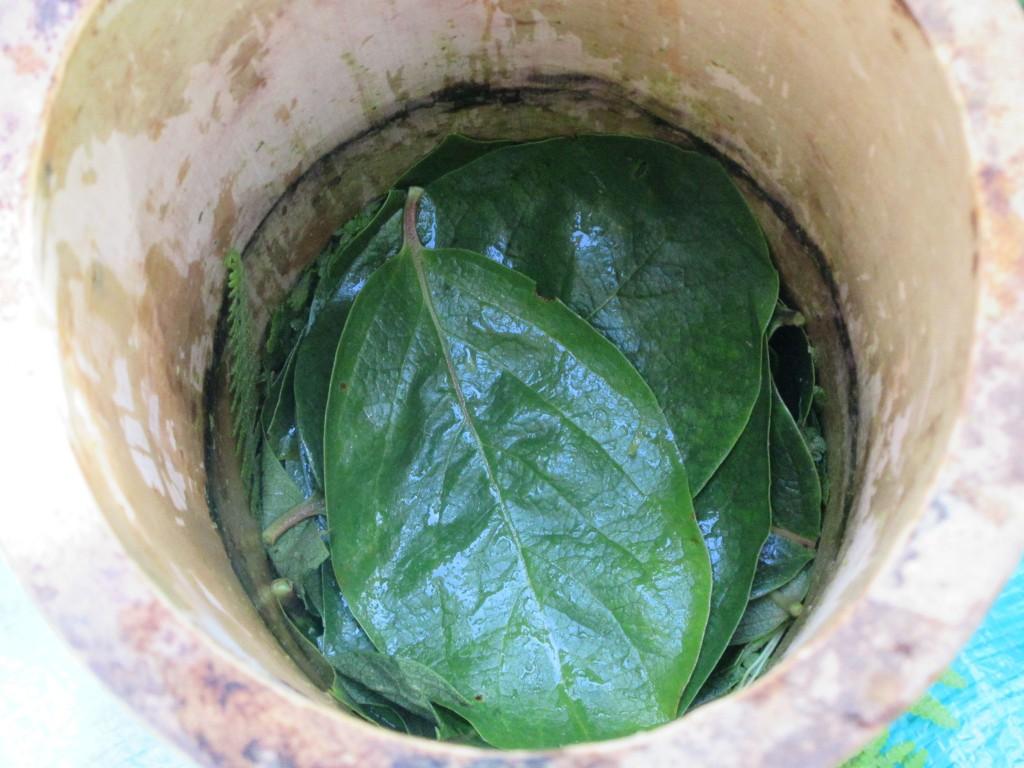 シダの上に柿の葉を敷く9月1日