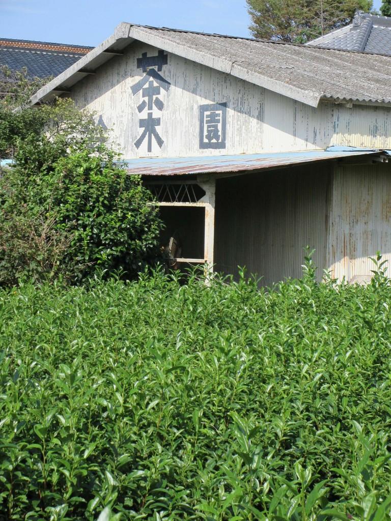鈴木園 河越茶 霞ヶ関