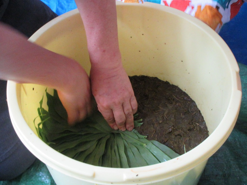 桶の茶葉の上に茗荷の葉を並べる