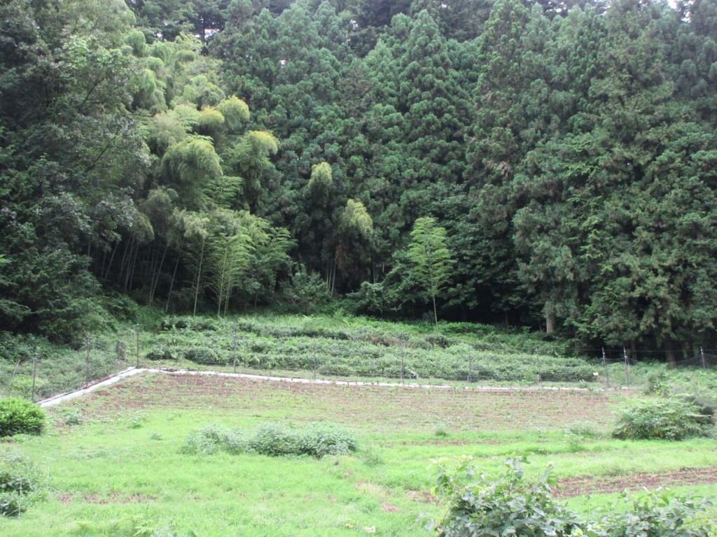 黒茶の茶畑全景