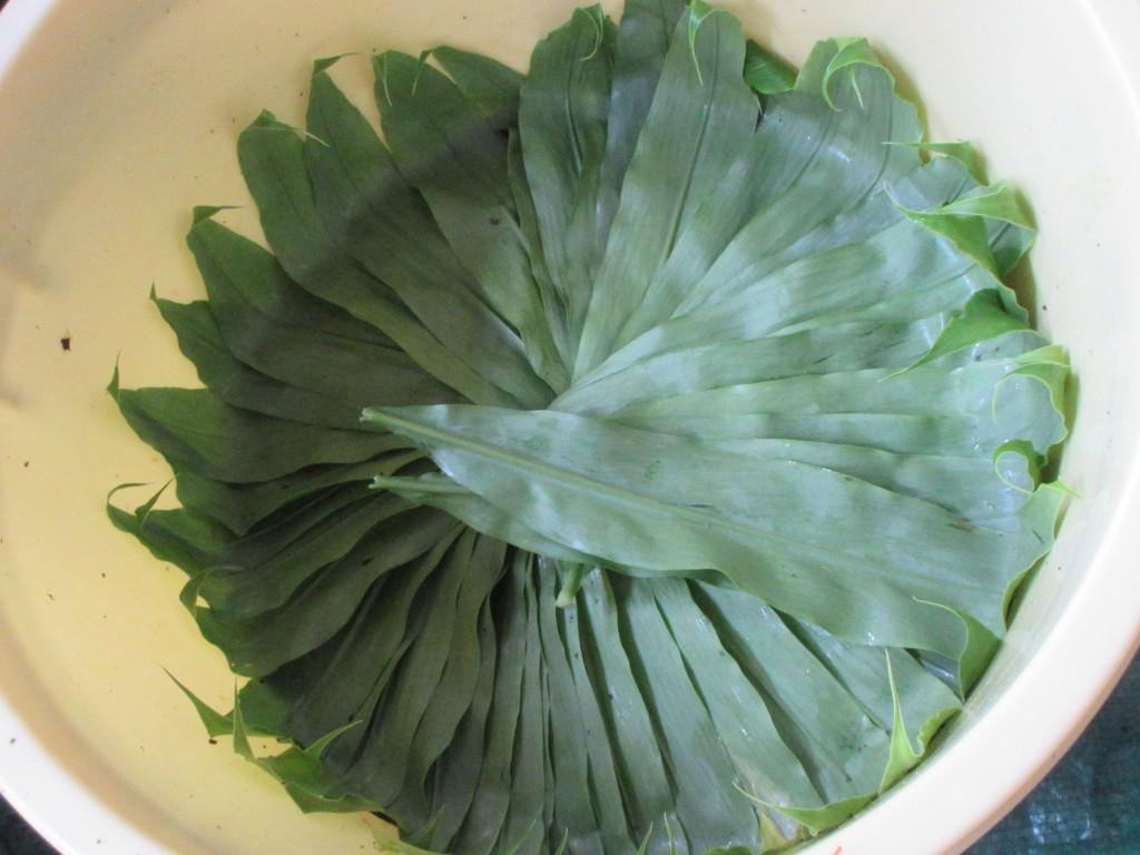 桶の中の茗荷の葉