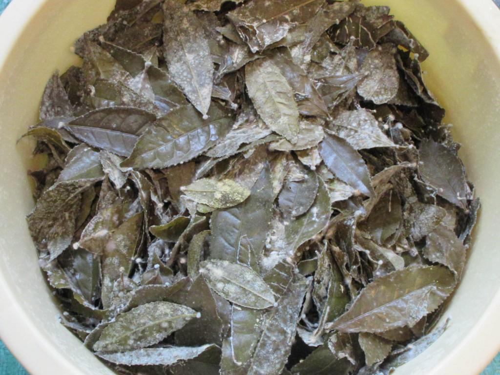 好気発酵の茶葉アップ