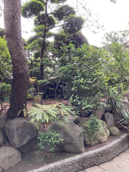 斎田記念館 唐茶4
